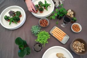 Things That You Need To Learn About Terrarium Workshop Singapore